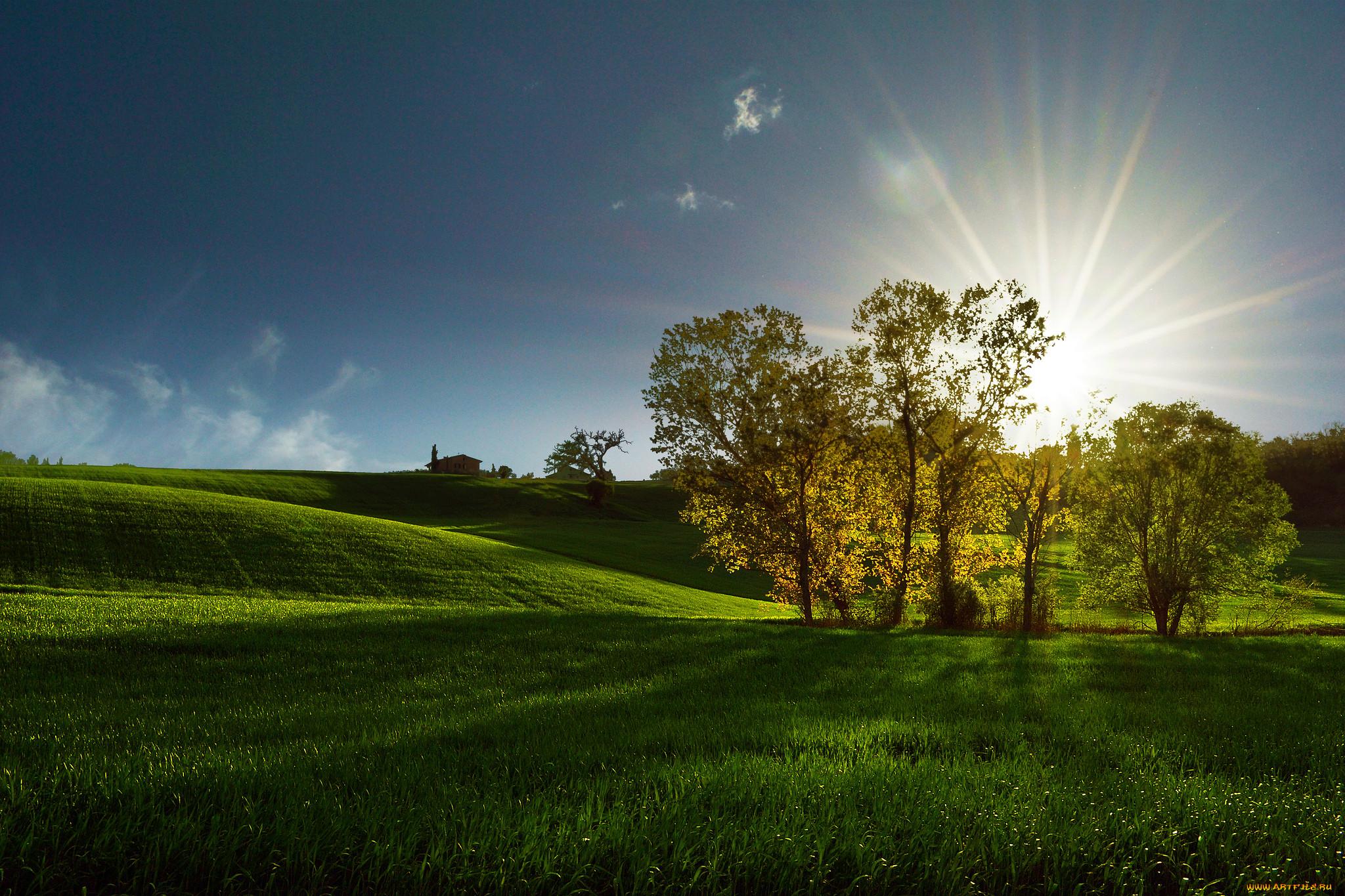 выбрать солнечная природа картинки пышной природы
